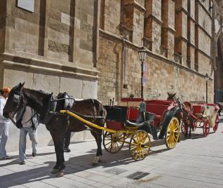 coche caballo palma: